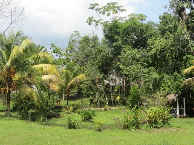 ayhuasca-retreat-center-peru-3.jpg