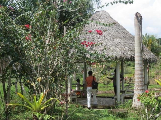 ayahuasca-retreats-peru-1.jpg